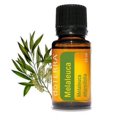 doterra-melaleuca-essential-oil